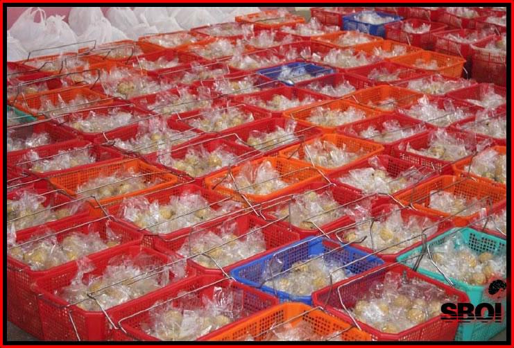 akanda-bhajans-9thnov-2008-11.jpg
