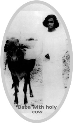 Sai Baba with holy cow