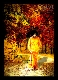 walking in the forest sri sathya sai baba